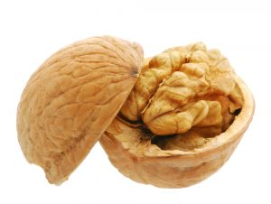 Walnut. It is isolated on the white background, the ripened fruit of a nut tree
